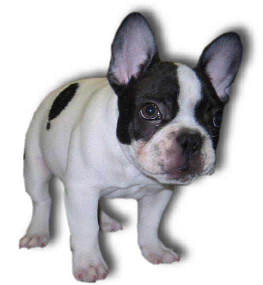 Epilepsy: Canine: Anticonvulsant Therapy