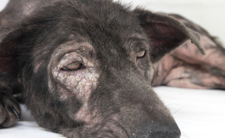 Euthanasia: Dogs and Cats When Is It Time?