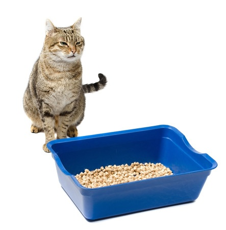 Cats that urinate outside the litter pan that do not have FUS may respond well to a larger litter pan