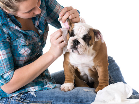 Image 123rf Dog ear Infection - How to control ear infections in dogs