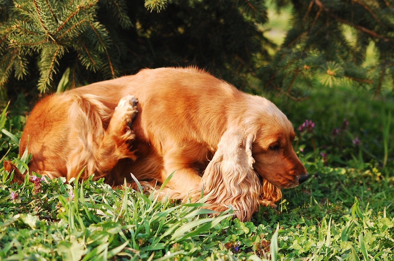 Itching in dogs is caused by drying,atopy,allergies,carb intolerance,contact irritation and more