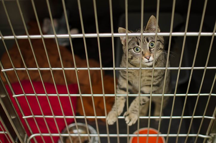 Cat declaw is painful and can cause biting behavior in cats with that procedure. However, a lot of Americans won't adopt a cat without that option.
