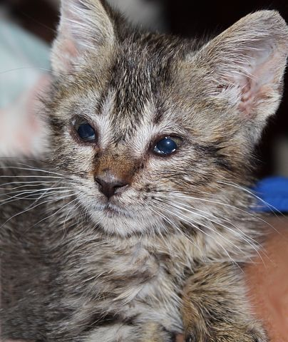 Upper airway disease in kittens especially can be life threatening and last through the pets life.