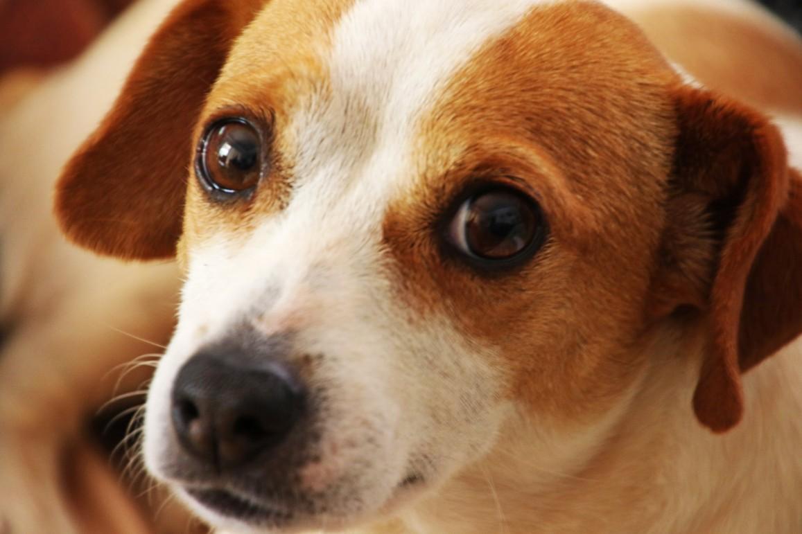 Paul Harvey's Ten Commandments for Pet Owners
