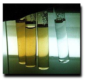 Ammonia As an Aquatic Toxin – Important