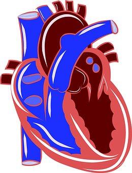 Bradycardia and sVPC's Technical Document