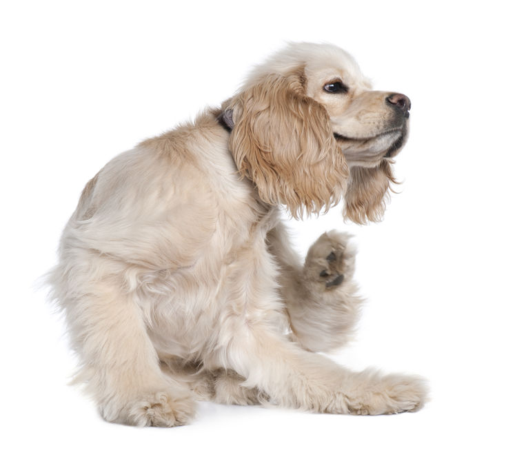 Cases: Cytopoint Canine Atopy Treatment Review / Results