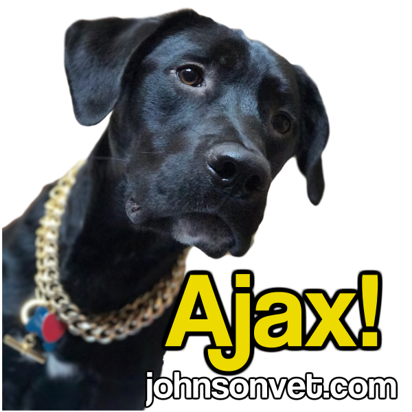 Ajax Is Getting Cataract Surgery When He's Ten: Why?