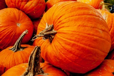 Pumpkin For Diarrhea in Dogs and Cats