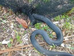 Reprehensible because it kills good snakes as well as bad.