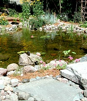 Liner ponds can look entirely natural, EPDM rubber liner is used.