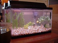 how to add an instant ammonia reducing colony of beneficial bacteria to your aquarium