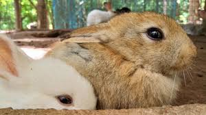 Care and Housing Bunnies As Pets
