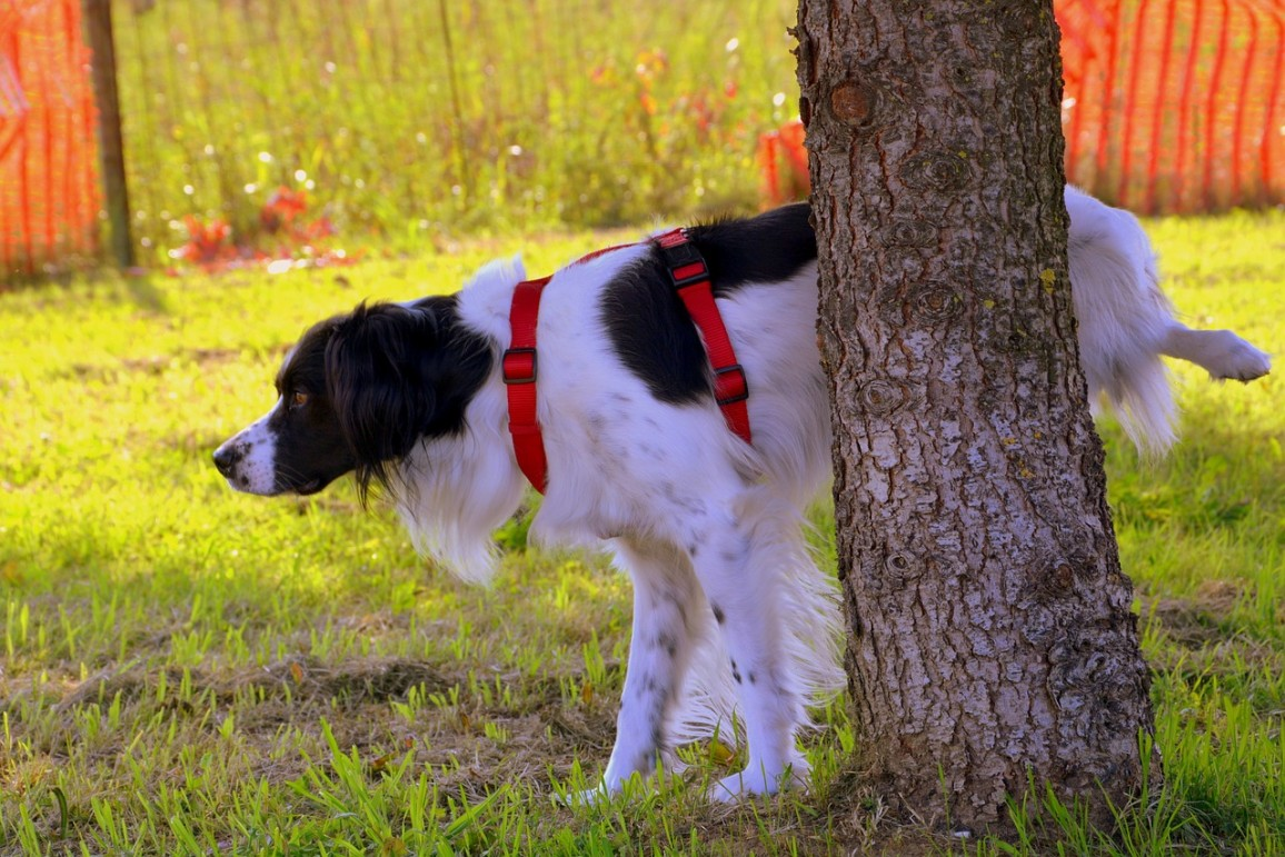 Dog Pee Killing Grass Yellow Stains in Yard From Dog Urine