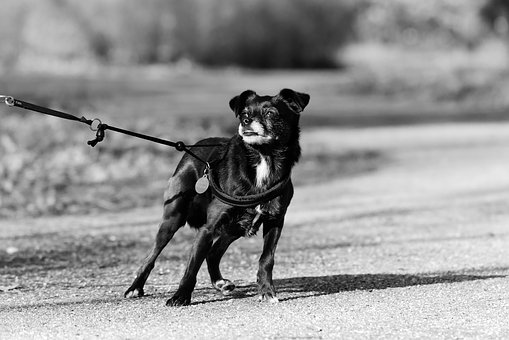 What To Do If Your Dog Is Terrible On A Leash