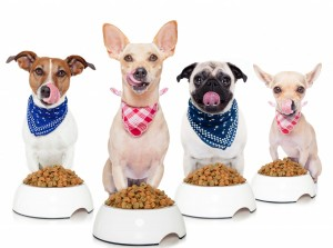 Home Cooking For Dogs