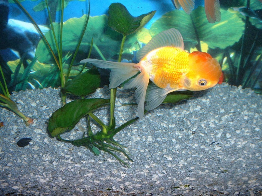 Setting Up A New Community Tank – For Beginners