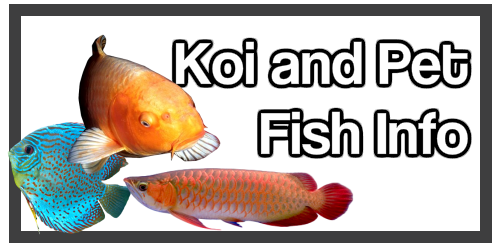 Koi and other Fish Health and Care Symptoms and Treatment Information of value to Dr Erik Johnson East Cobb Veterinarian Customers