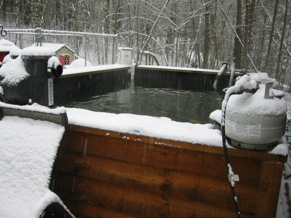 Getting Ponds and Koi Ready for Wintertime