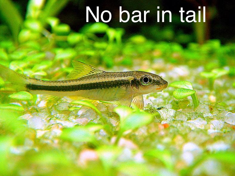 Algae Eater Aquarium