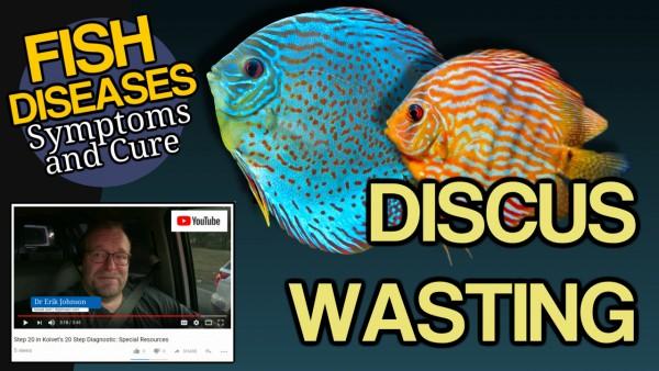 Fish Symptoms of Disease
