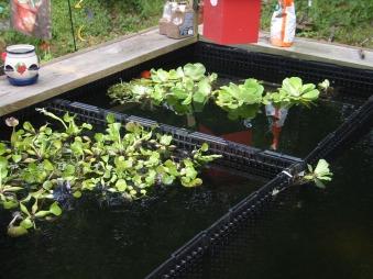 plant filters for algae control
