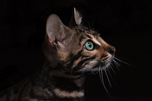 Inflammatory Bowel Disease ( IBD ) - Feline