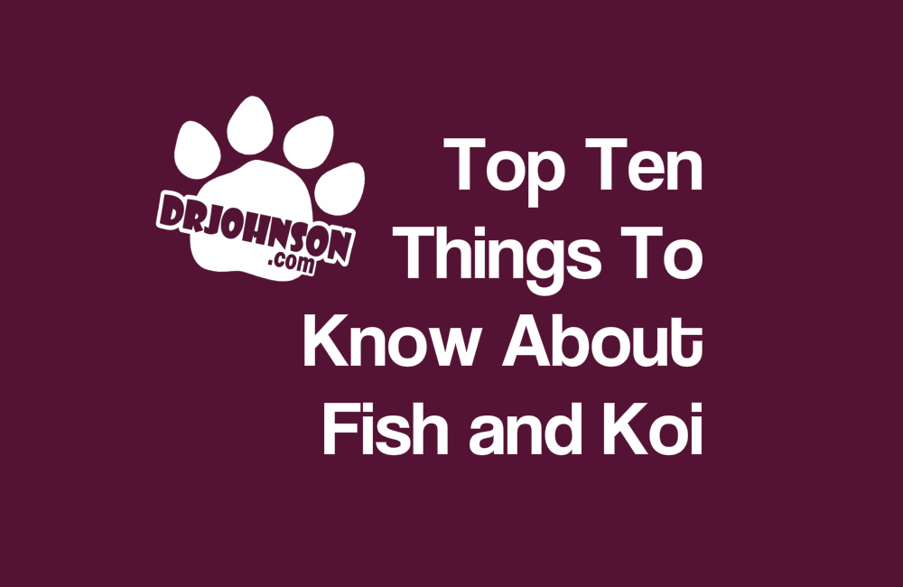 The Top 10 Things You Need To Know: Pond & Koi Fish