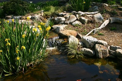 koi and pond fish do extremely well in eco system ponds.