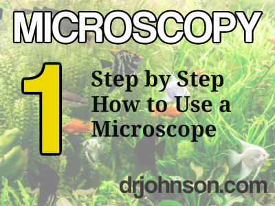Step by Step How To Use A Microscope