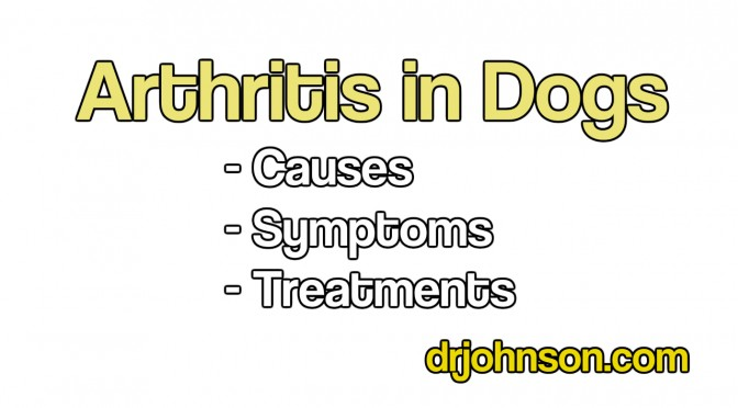 "The Definitive ""Arthritis in Dogs"" E-Book Free"