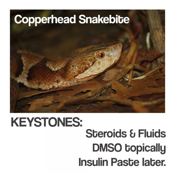Copperhead snakebite